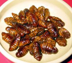 信州の珍味にも色々とあるが、県外の方々がビックリするのが虫料理?とりわけ、3大虫料理は蜂の子・ざざむし・ひび・・・である。本日はひび(南信州の呼名)について